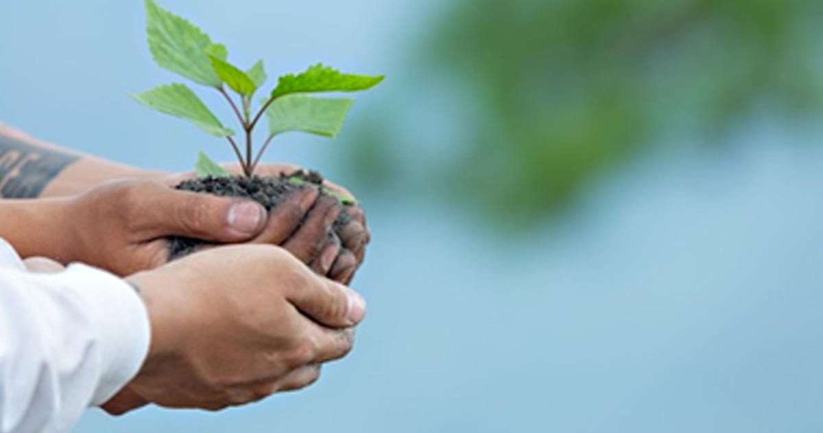 Lee más sobre el artículo Día mundial del Medioambiente